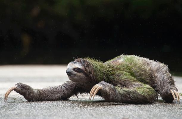 عکس های حیوان تنبل - تنبل ترین جانور جهان