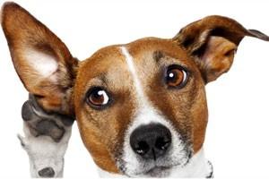نکاتی در مورد گوش دادن فعال و گوش دادن موثر