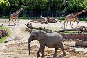 باغ وحش کارآفرینی
