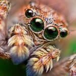 عکس های عنکبوتها: عنکبوتها را هم میتوان دوست داشت
