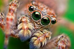 تصاویر عنکبوت ها - عکس از عنکبوت ها