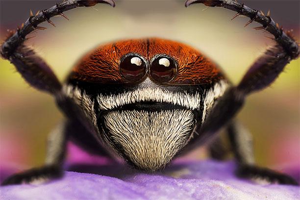 عکس عنکبوت از فاصله نزدیک