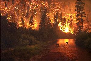 آتش سوزی در جنگل های یلوستون
