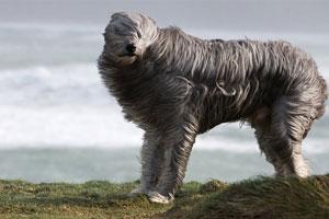 عکسهای زیبای حیوانات