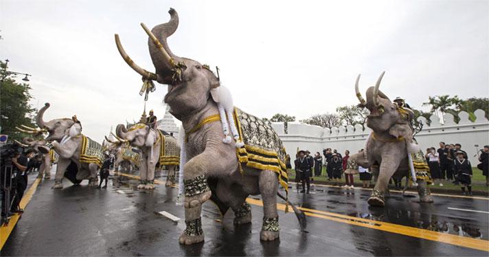 تایلند را کشور فیل های سفید می نامند