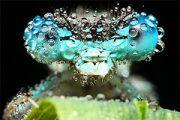 عکس حشرات – گمشده در میان قطره های آب