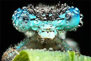 عکسهای ماکرو از حشرات
