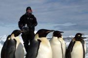 مجموعه عکس پنگوئن ها (پاول نیکلن)