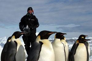 پاول نیکلن و مجموعه عکس پنگوئن از قطب جنوب
