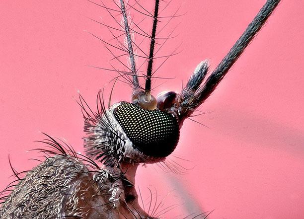 عکاسی ماکرو حشرات