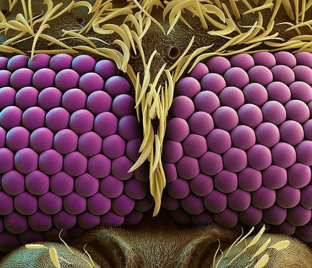 عکاسی از حشرات