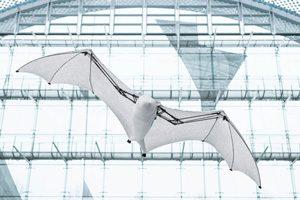 خفاش پرنده فستو
