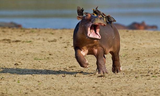 کس های خنده دار حیات وحش - عکس خنده دار حیوانات