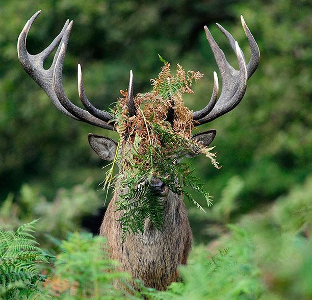عکس حیوانات وحشی و زیبا