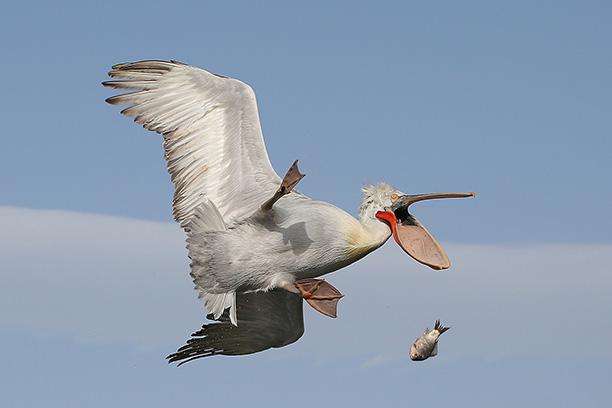 عکسهای زیبا از حیوانات وحشی و پرندگان