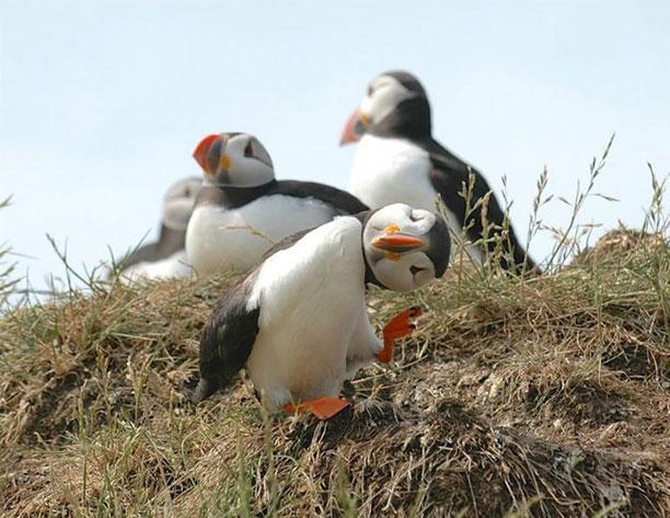 عکس پرندگان وحشی و زیبا - عکس حیوانات خنده دار