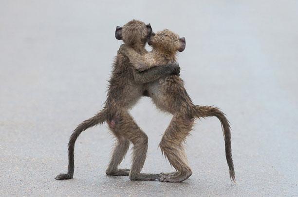 تصاویر مسابقه کمدی حیات وحش - حیوانات بامزه