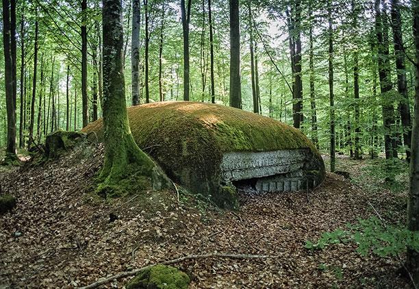 عکس از جنگ جهانی اول - نبرد در جنگلهای آرگون فرانسه