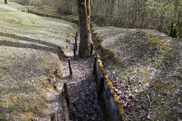 تصاویر جنگ جهانی اول - تصویری از درخت تنومند در جنگلهای لندن در مناطق مرتبط با جنگ جهانی اول