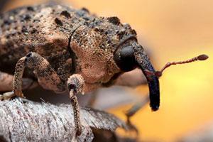 چند عکس ماکرو از حشرات و به طور خاص چشم حشرات