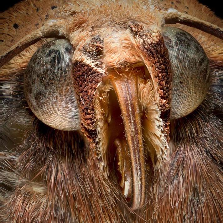 عکس ماکرو از حشرات - چشم و چهره حشرات
