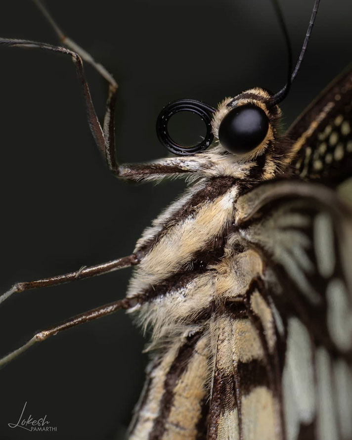 عکس ماکرو از حشرات