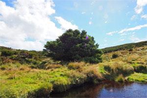 تک درخت تنها - تنهاترین درخت روی زمین