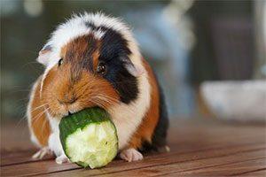 نگهداری حیوانات خانگی و عادتها و اتیکت مربوط به آن