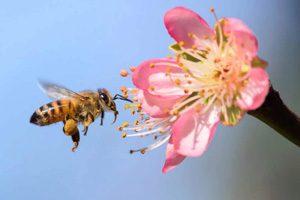 معمای بصری - زنبور و پروانه
