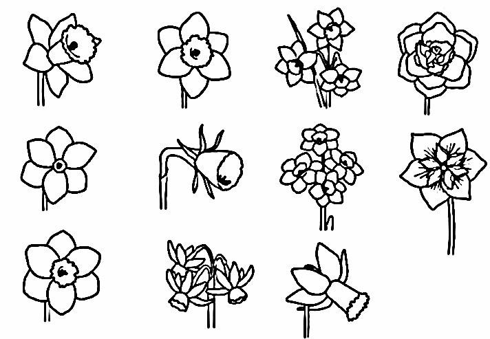 انواع گل های نرگس