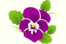 مجموعه عکس گل بنفشه