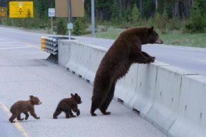 پل هایی برای محافظت از حیوانات