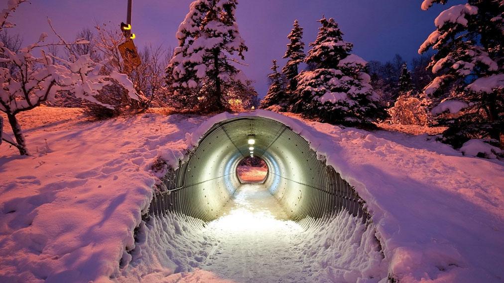 تونل برای عبور گونههای مختلف جانوران - فنلاند